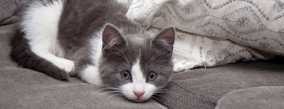 Nyttig info om dyrehold