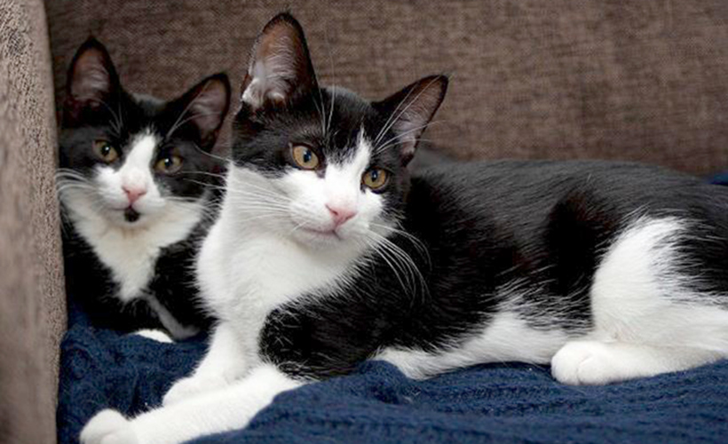 Omplasseringen av katter er i full gang!