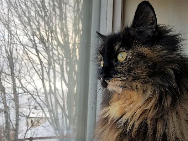 kattunger gis bort nordland
