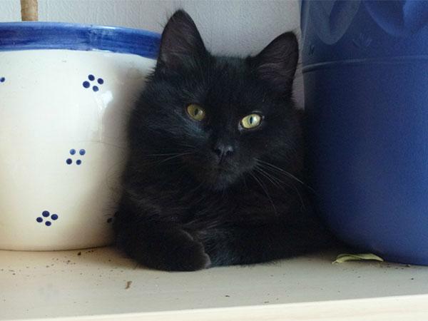 ailo-kattunge-dyrebeskyttelsen-norge-bodø